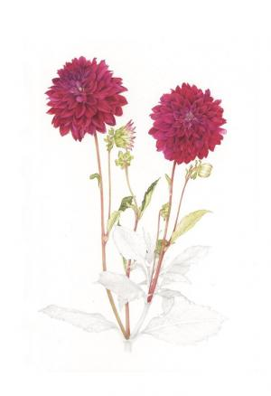 Zeichnung: Margareta Pertl