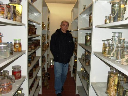 In der Feuchtpräparate-Sammlung