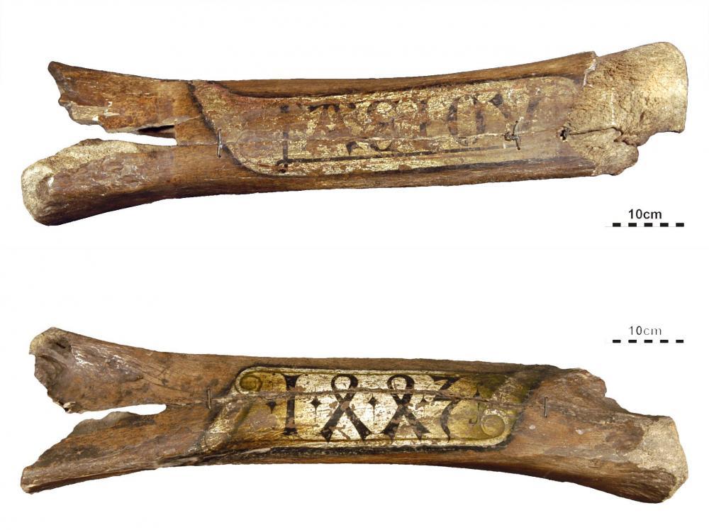 Riesenknochen von St. Stephan