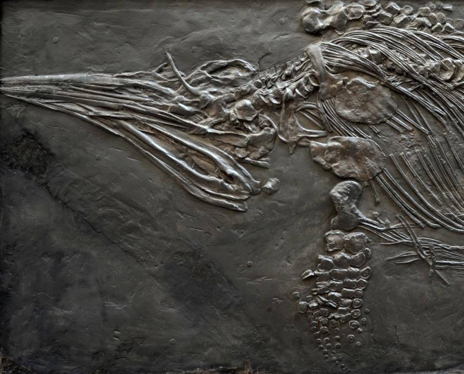 """Ichthyosaurier """"Stenopterygius quadriscissus"""""""