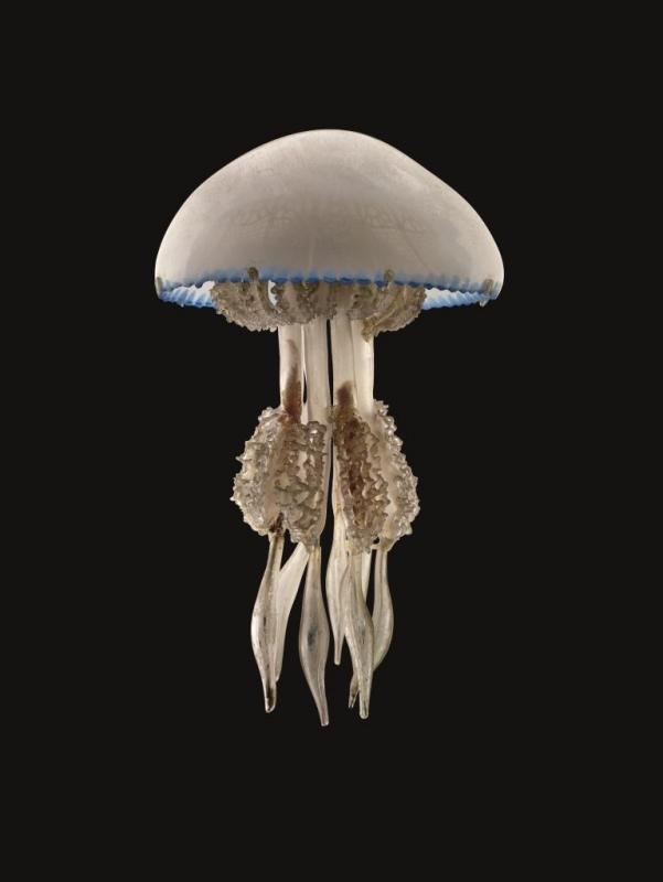 Glasmodell einer Blumenkohlqualle