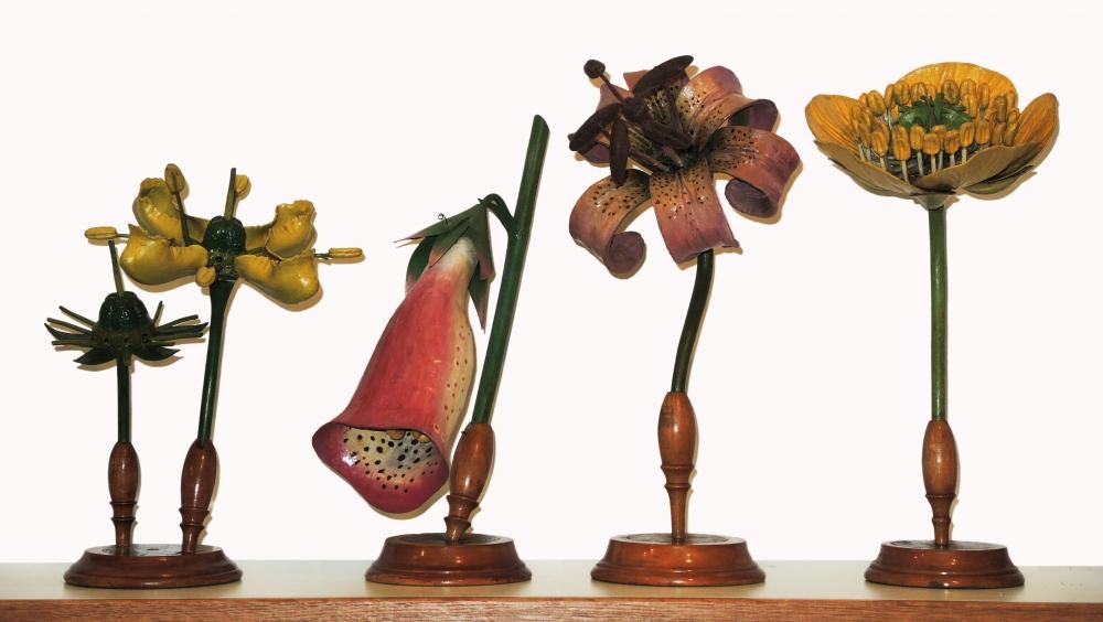 Blütenmodell von Aconitum napellus (Blauer Eisenhut)