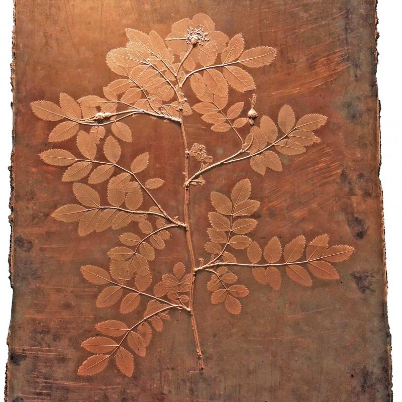 Kupfer-Patrize von Rosa alpina Wien, um 1855